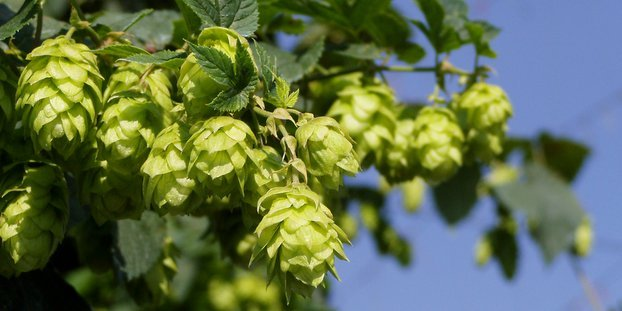 American_Hops_Conference
