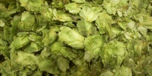 Hops: Craft brewers love them.
