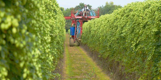The World of Beer Craft: Breaking down the British hop harvest