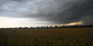 bad malting barley crop