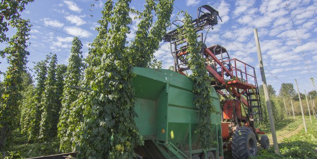 We're super psyched: CBB is headed to Rogue Farms for the 2016 hop harvest