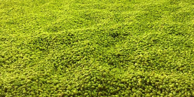 We ask St. Louis' Schlafly about four experimental hops it's crushing on