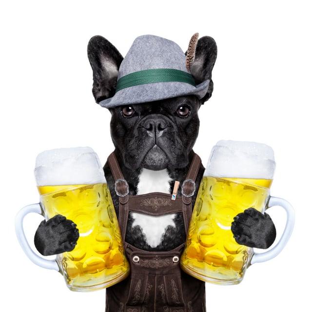 dog beer hat