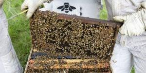 hive-splitting-051815-0053