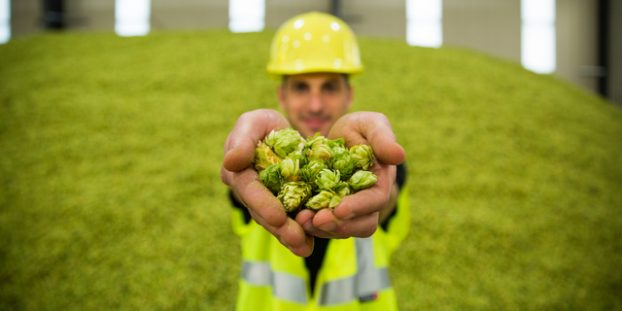 Founders hops cbb crop guy holding