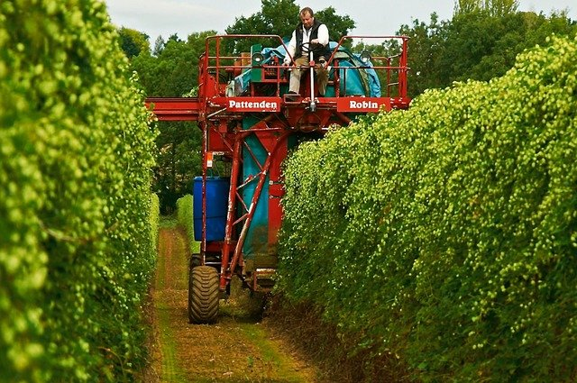 Hop Harvest British Stock Farms