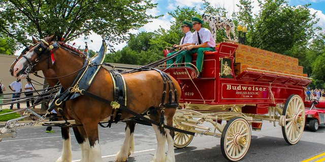 Budweiser horses carriage cbb crop